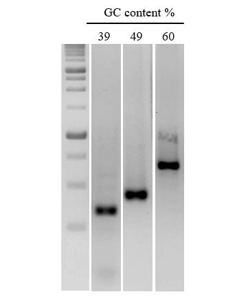 Efficient amplification of DNA sequences with a range of GC content.